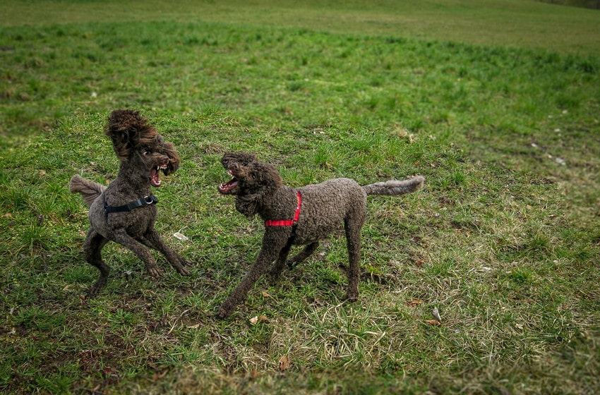 5 Tips on How to Stop a Dog Aggression