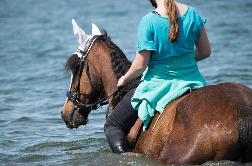Can You Ride a Horse While It Swims