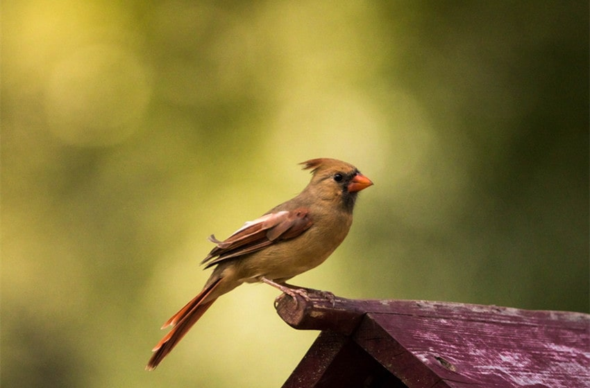 Cardinal Meaning
