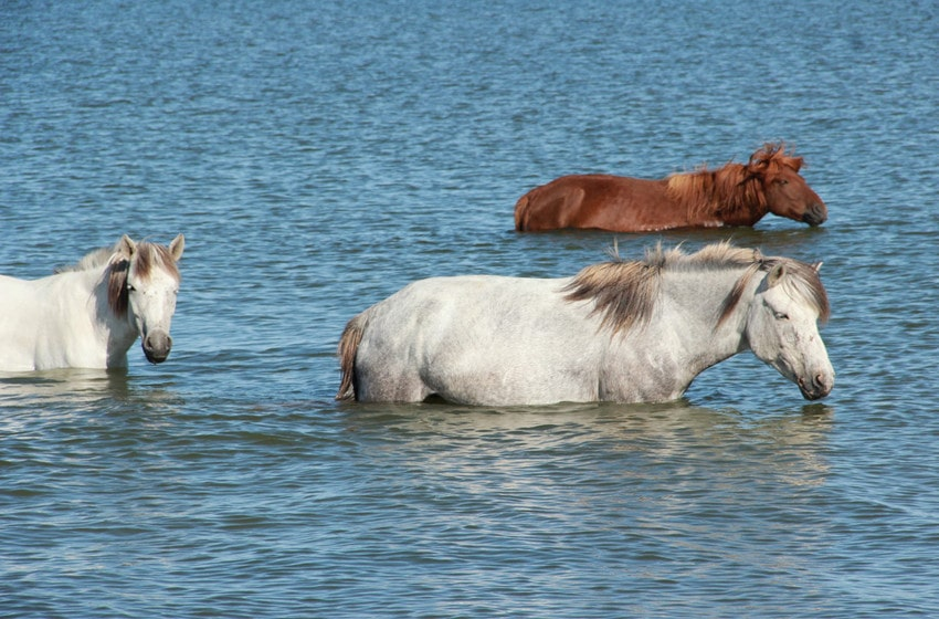 Do Horses Like to Swim
