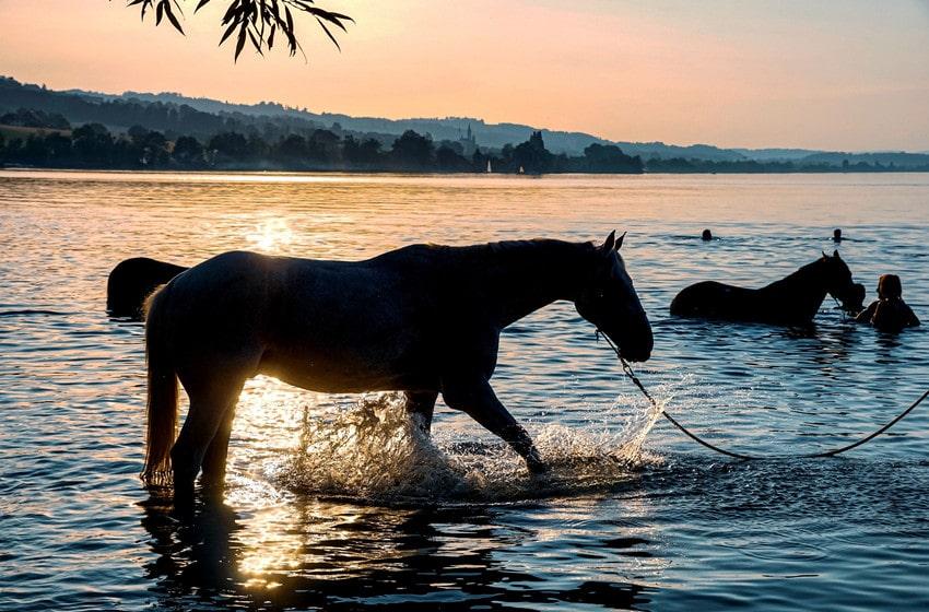 How Do Horses Swim