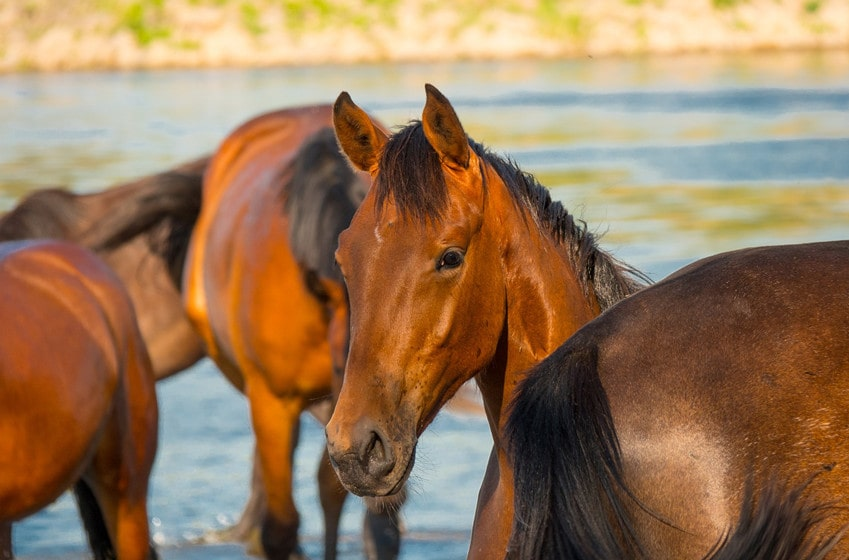Is Swimming Good for Horses