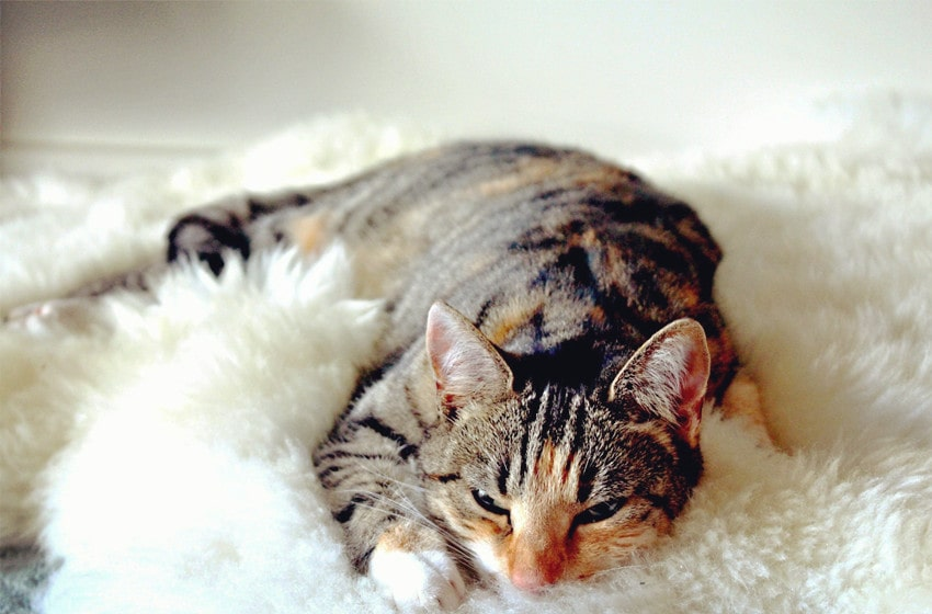 Spotted tabby cats