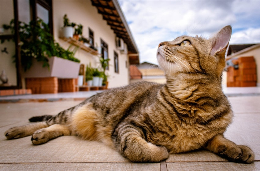 The World of Tabby Cats: What You Need to Know